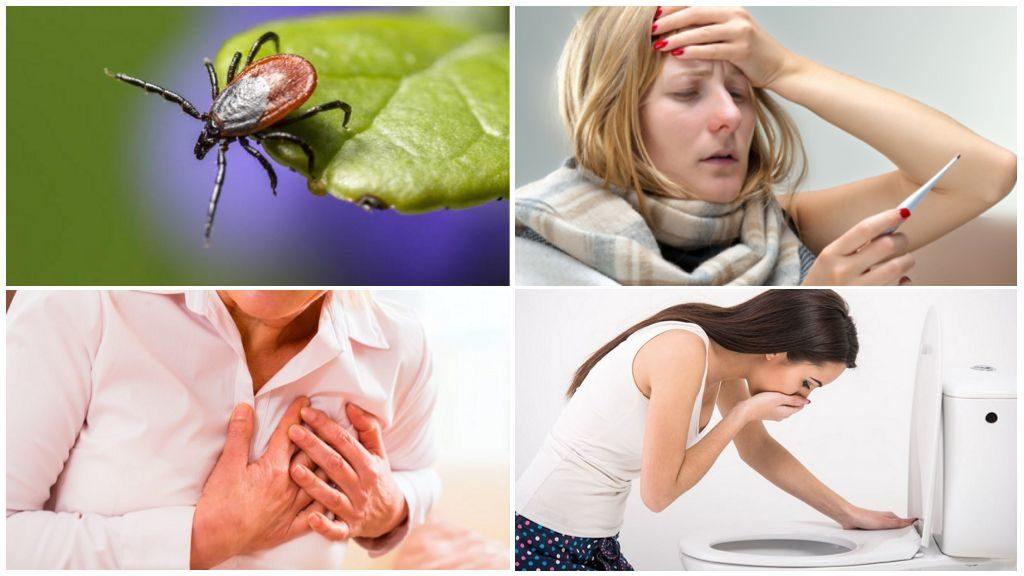 Подробный обзор особенностей развития и жизнедеятельности таёжных клещей: какие заболевания переносит, как защититься, что делать при укусе