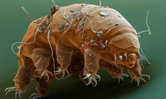 Об опасности пылевых клещей: почему появляются, признаки появления, инструкция как уничтожить инсектицидами и народными методами