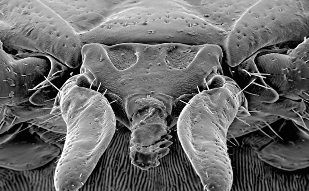 Подробный обзор причин, почему возникает аллергия на пылевых клещей: описание жизненного цикла и причин появления клещей в пыли, признаки присутствия насекомого, симптомы аллергической реакции и способы лечения
