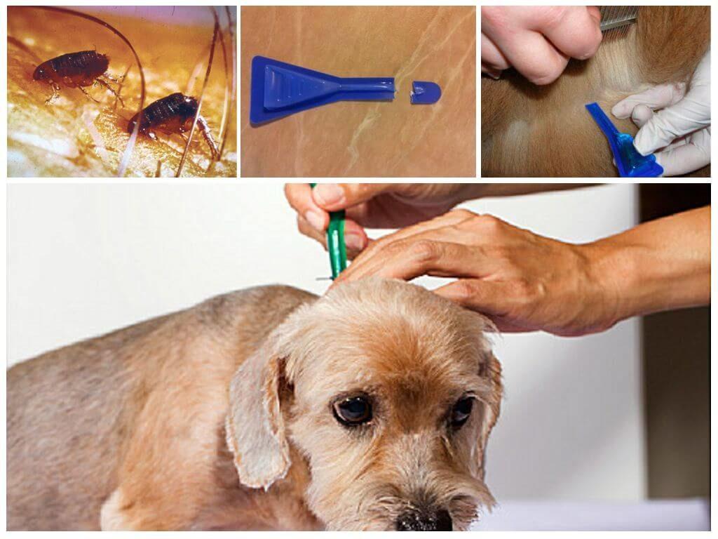 таблетка для собак от клещей