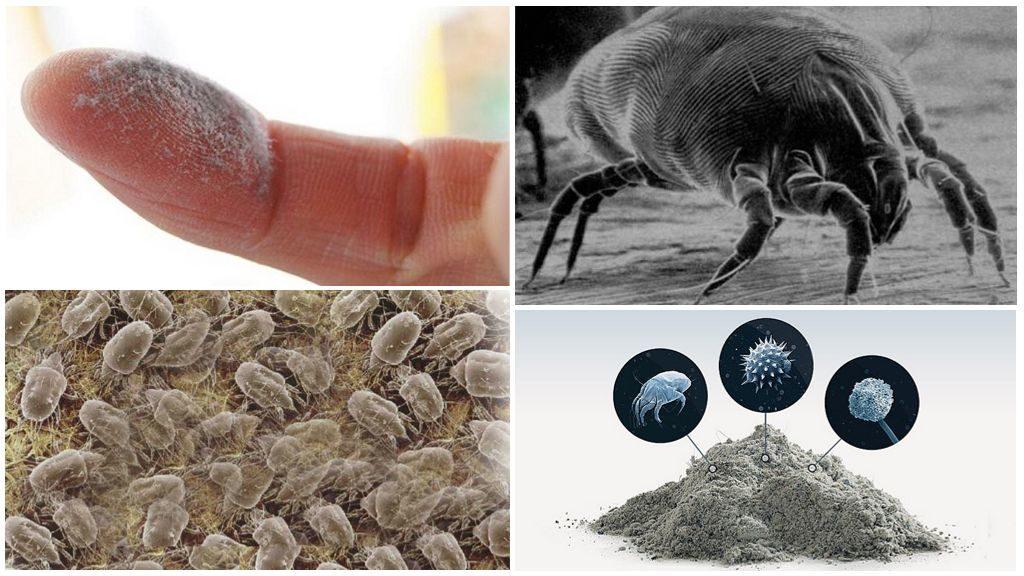 Что такое бельевые клещи: описание насекомого, причины и симптомы появления, методы борьбы, эффективные средства