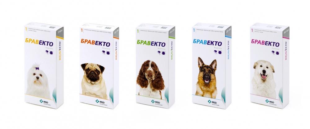 Подробная инструкция как избавить от подкожного клеща собаку: описание насекомых, как переносятся, признаки заражения, диагностика, эффективные препараты