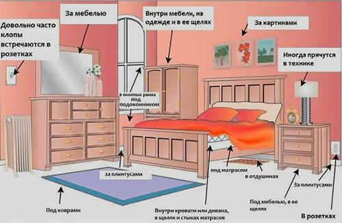 Подробный обзор как происходит перемещение клопов из квартиры в квартиру: способы распространения, кто переносчик, как бороться