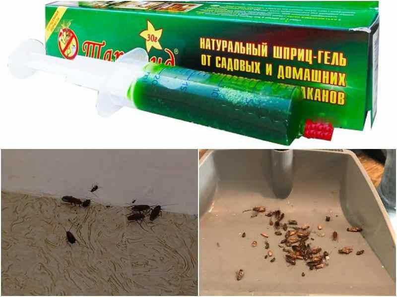 Инструкция как выбрать шприц от тараканов и бороться с насекомыми: лучшие бренды, руководство по применению, преимущества и недостатки, меры безопасности, советы