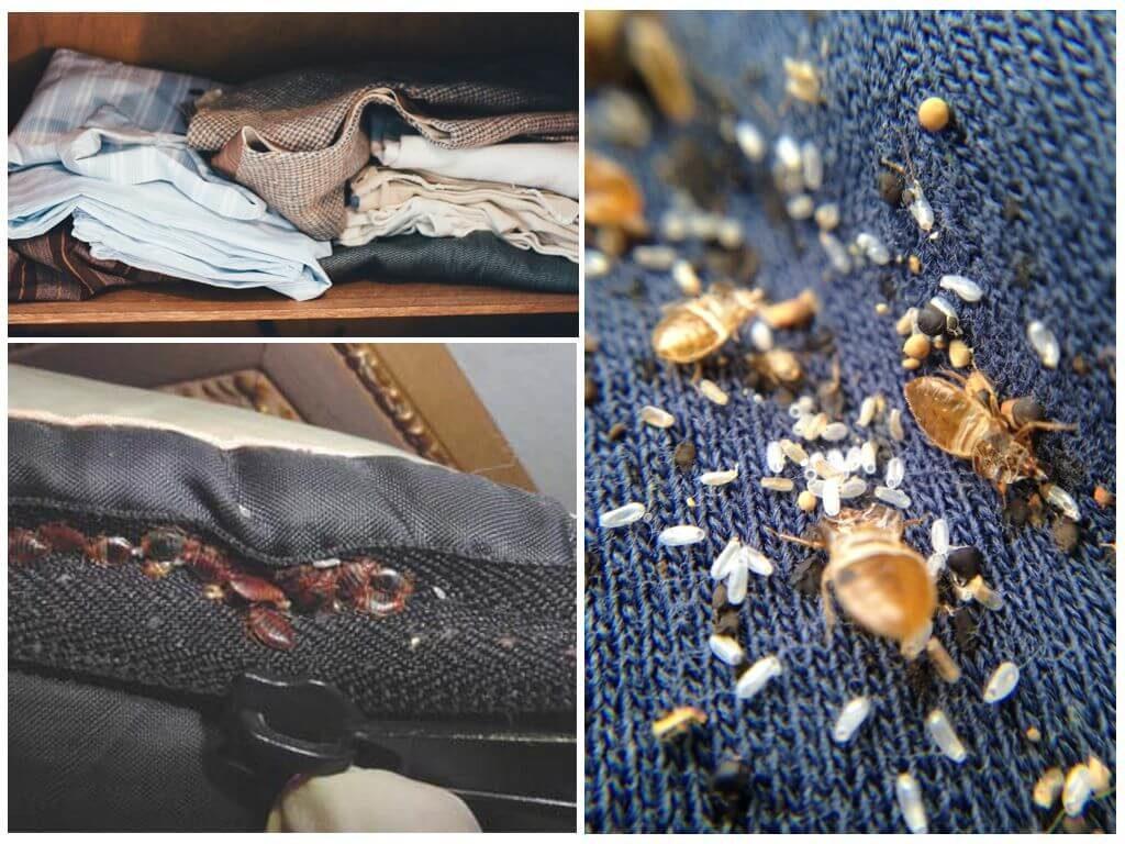 Руководство как обнаружить клопов в одежде и шкафу: как они туда попадают, способы обработки, эффективные средства уничтожения и профилактика