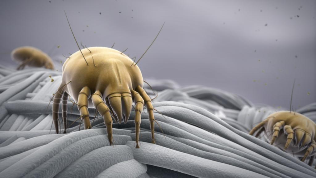 Где живут и как размножаются разные виды клещей: рекомендации как защититься от укусов, профилактика и дезинфекция