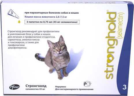 Откуда появляется и как лечится саркоптоз у кошек: описание насекомого, жизненный цикл, причины заражения, как определить, эффективные средства лечения, опасен ли человеку