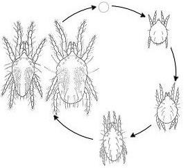 Как бороться с паутинными клещами на растениях: причины появления, описание вредителя, какие условия нужны для развития, химикаты для уничтожения, народные советы