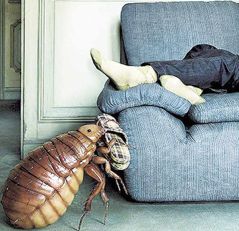 Обзор причин, почему появляются клопы в квартире: как выявить, где прячутся, эффективные средства для борьбы