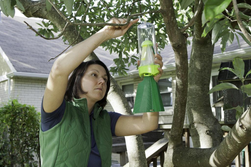 Пошаговая инструкция как бороться с клопами дома и в огороде: самые действенные средства, правила применения и безопасности, предупреждение появления