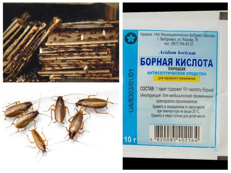 Обзор лучших действенных народных средств для борьбы с тараканами: чего боятся, правила применения, профилактика появления