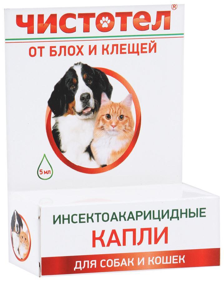 Кусают ли людей кошачьи и собачьи блохи: как кусаются блохи животных, чем вредны, как предотвратить