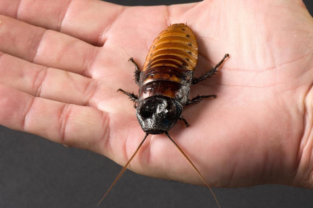 Обзор правил проведения дезинфекции против тараканов: как подготовиться, какие препараты безопасны, куда звонить чтобы уничтожить тараканов