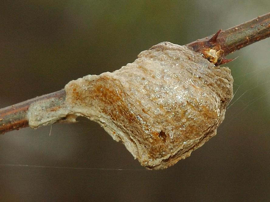 Руководство как найти и уничтожить личинок тараканов: какие бывают, как выглядят, время жизни, где прячутся, методы борьбы