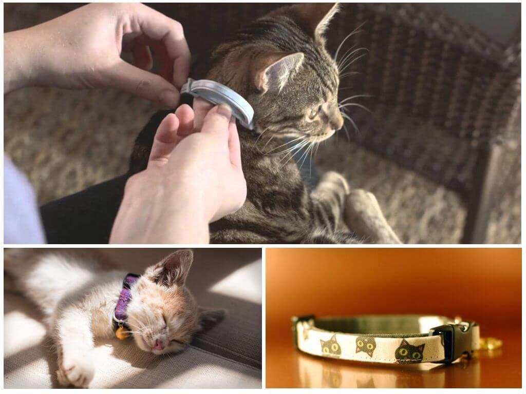Инструкция по применению ошейников от блох для кошек: время и принцип действия, разновидности, правила безопасности, можно ли беременным кошкам, эффективность