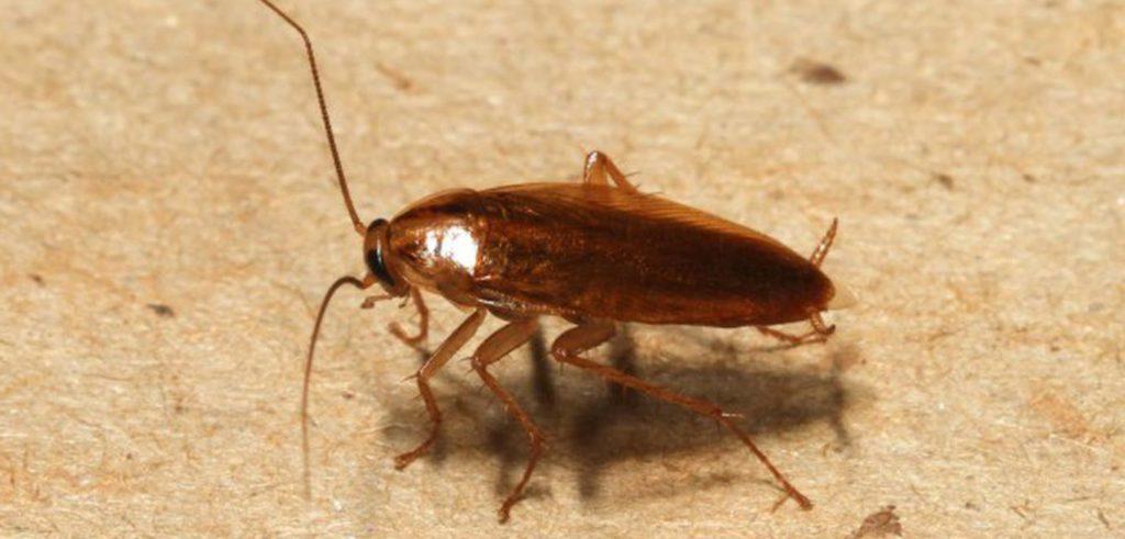Обзор средств и условий, которых боятся тараканы: насекомые, птицы, животные, температура, вещества, которые отпугивают паразитов