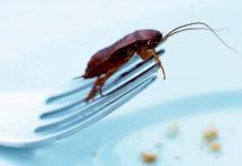 тараканы чем опасны