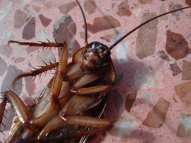 Причины появления тараканов в доме и способы избавления