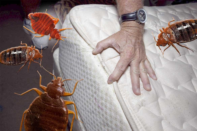 Чем опасны постельные клопы?